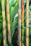 Dettagli dei tronchi di bambù in verde ed in giallo immagine stock