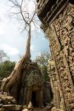 Dettagli del carvind di Prohm di tum con l'albero Immagine Stock Libera da Diritti