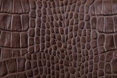 Dettagli del cuoio dell'alligatore di Brown Fotografia Stock Libera da Diritti