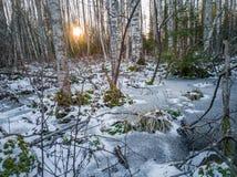 Dettagli del primo piano di paesaggio in Sunny Winter Day con neve che riguarda parzialmente i precedenti al suolo e astratti fotografia stock libera da diritti