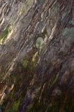 Dettagli della caverna di Melissani Fotografie Stock Libere da Diritti