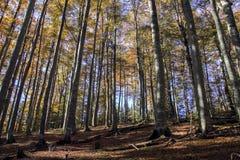 Dettagli della foresta in autunno tardo Immagini Stock