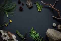 Dettagli della natura - le pietre, la corteccia di albero, i coni, il fiore del tagete di palude, i rami di pino e la felce copro Immagini Stock