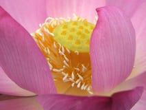 Dettagli della pianta Fotografie Stock