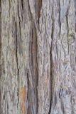 Dettagli della quercia di legno della corteccia immagini stock