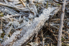 dettagli di inverno Fotografie Stock Libere da Diritti