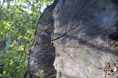 Dettagli di legno tagliato Fotografie Stock Libere da Diritti