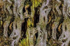 Dettagli di struttura della corteccia di albero fotografia stock
