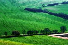 Dettagli il paesaggio al campo del sud di Moravian durante la molla, repubblica Ceca Immagine Stock