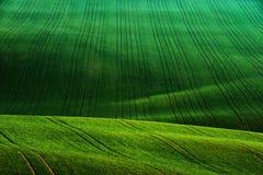 Dettagli il paesaggio al campo del sud di Moravian durante la molla, repubblica Ceca Fotografie Stock Libere da Diritti