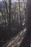 dettaglia la foresta scenica Fotografia Stock Libera da Diritti