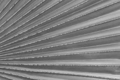 Dettaglia la struttura di foglia di palma Fotografia Stock