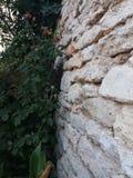 Dettaglio anziano del castello della regina Maria in Balchik, Bulgaria Fotografia Stock