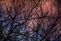 Dettaglio astratto dell'albero Immagini Stock