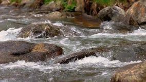 Dettaglio d'abbondanza del fiume con la fine su di roccia, in montagne spagnole di Pirenei video d archivio