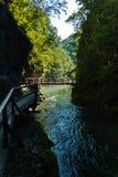Dettaglio da un percorso al canyon di Vintgar in alpi slovene Immagini Stock Libere da Diritti