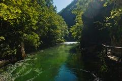 Dettaglio da un percorso al canyon di Vintgar in alpi slovene Fotografia Stock