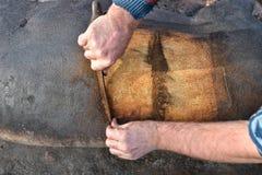 Dettaglio dei capelli domestici tradizionali di rimozione da spirito macellato del maiale Fotografia Stock