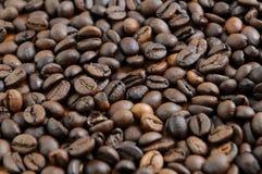 Dettaglio dei chicchi di caffè Immagine Stock