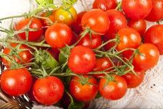 Dettaglio dei pomodori Fotografie Stock