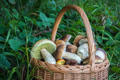Dettaglio del canestro di vimini con i funghi commestibili Fotografia Stock
