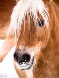 Dettaglio del cavallo (116) Immagini Stock Libere da Diritti