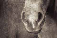 Dettaglio 188 del cavallo Immagini Stock Libere da Diritti