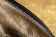 Dettaglio del collo del cavallo Immagine Stock