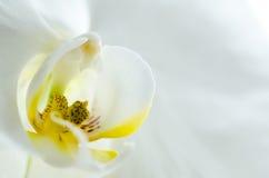 Dettaglio del fiore Fotografia Stock Libera da Diritti