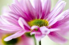 Dettaglio del fiore Immagini Stock