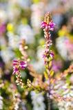 Dettaglio del fiore fotografia stock