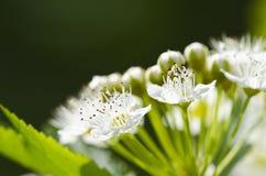 Dettaglio del fiore Immagini Stock Libere da Diritti