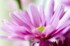 Dettaglio del fiore Immagine Stock Libera da Diritti