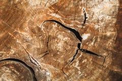 Dettaglio del fondo di legno incrinato di struttura del ceppo Fotografia Stock Libera da Diritti