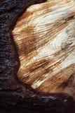 Dettaglio del legno di sawing con la corteccia Immagini Stock Libere da Diritti