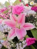 Dettaglio del mazzo o centro del fiore naturale in fucsia rosa fotografia stock