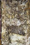 Dettaglio del micelio della putrefazione a secco immagine stock