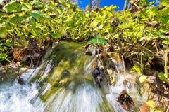 Dettaglio del parco nazionale dei laghi Plitvice Immagine Stock Libera da Diritti