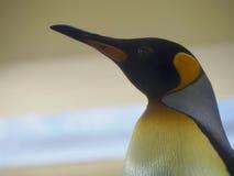 Dettaglio del pinguino Immagini Stock Libere da Diritti