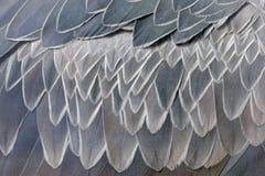 Dettaglio del primo piano della piuma di Shoebill grigio, rex del Balaeniceps, ritratto delle piume di grande uccello con becco,  fotografie stock libere da diritti