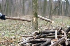 Dettaglio del ramo rotto per distruzione a della tempesta Immagine Stock