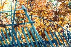 Dettaglio del recinto selvaggio di lerciume con le foglie dorate Fotografia Stock