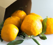 Dettaglio del sacco di carta delle foglie dei mandarini Fotografia Stock