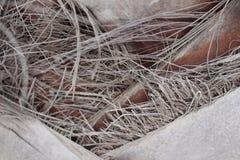 Dettaglio del tronco della palma Immagini Stock Libere da Diritti
