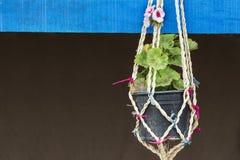 Dettaglio del vaso di fiore appeso Fotografie Stock Libere da Diritti