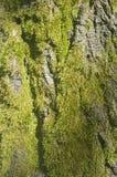 Dettaglio dell'albero con colore verde fotografie stock libere da diritti