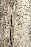 Dettaglio dell'assenzio romano Fotografia Stock Libera da Diritti