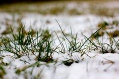 Dettaglio dell'erba di Snowy Fotografie Stock