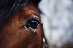 Dettaglio dell'occhio del cavallo Fotografie Stock Libere da Diritti