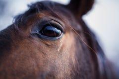 Dettaglio dell'occhio del cavallo Fotografia Stock Libera da Diritti